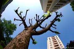 Around the tree.. (Thibault B Photography) Tags: blue sky france tree green grenoble vert fisheye bleu ciel arbre immeuble verticality isre nikond60 nikon105