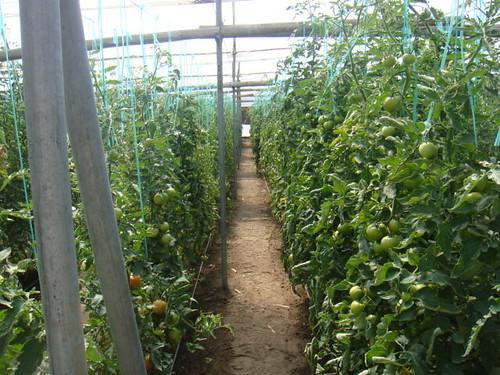 ecuador-retirement-farm