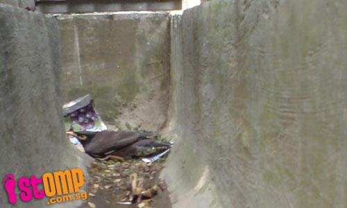 Poisoned birds left to suffer all around Toa Payoh estate