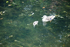 park dublin bird nature water birds europe stannes publicpark streetsofdublin infomatique photographedbyinfomatique