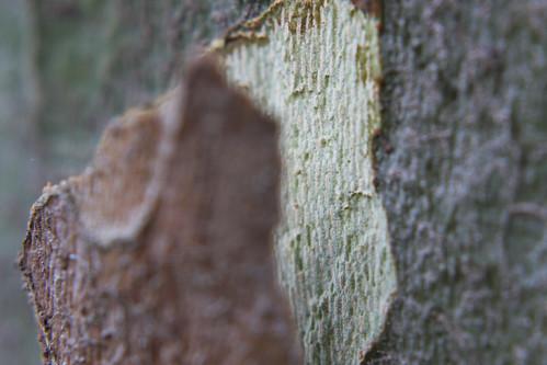 Tree Bark Macro