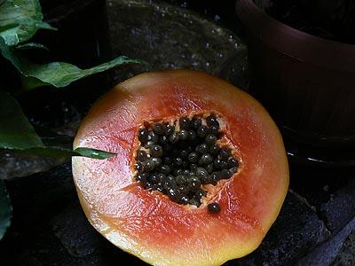 papaye.jpg