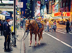 New York City - The Police Horse (Philipp Klinger Photography) Tags: camera new york city nyc newyorkcity travel light shadow people horse usa ny newyork man color amsterdam animal bike bicycle night america square us al nikon colorful theater dof nocturnal cross unitedstates theatre bokeh manhattan district f14 candid united unitedstatesofamerica von broadway police nypd security m special mc explore mounted processing operations times states division amerika frontpage philipp stree available donalds unit staaten klinger vereinigte flickrshop of d700 sigma50mmf14 dcdead