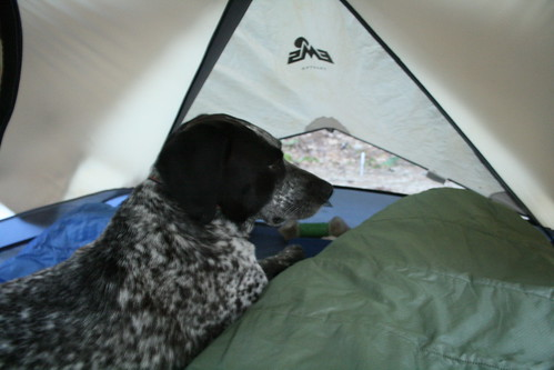Misty in Tent