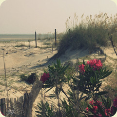 The Last Song (astanse(Angela Stansell)) Tags: pink sea beach beautiful georgia island sand dune august tybee angela oats 2009 oleander astanse prettypinkisms