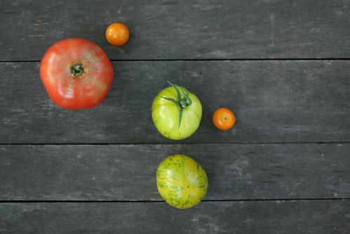 tomatostudy2