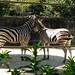 Taronga Zoo_5