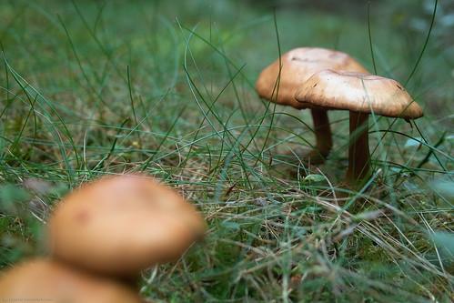 Polarized mushrooms - reflecting sky at 1,6s