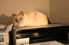 Kitty comandeers the printer