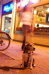 Dawson at Blueberry Hill (scoodog / Tom Myler) Tags: beagle night stlouis dawson universitycity blueberryhill ucityloop universitycityloop 1855mmf3556gii