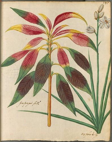 Hortulus Monheimensis 00305