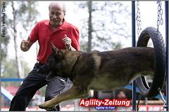 Deutscher Schäferhund - Agility