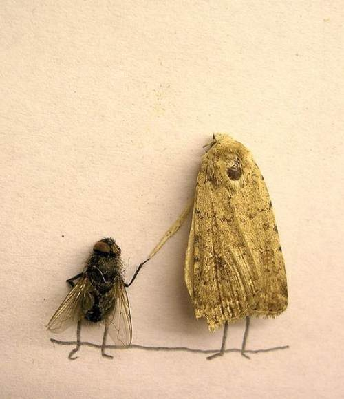 dead-flies-art-11