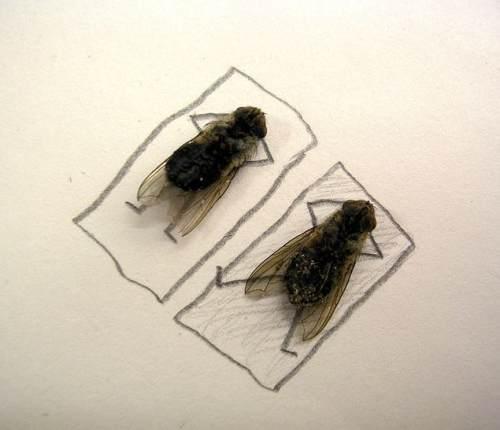 dead-flies-art-2