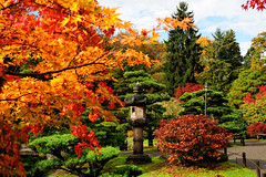 Fall colors (sunjaec) Tags: seattle autumn fall colors gardens landscape japanese tamron foilage 2875mm tamron2875mmf28 nikoncapturenx d700