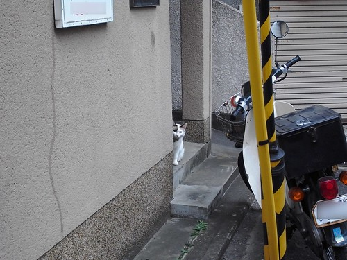 Today's Cat@20091025