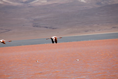 baudchon-baluchon-laguna-colorada-0431