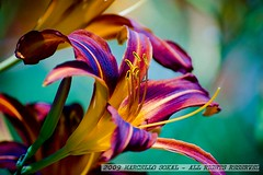 COLORS OF NATURE (msokal) Tags: flower nature colors beauty digital colours sony flor marcello sokal a350
