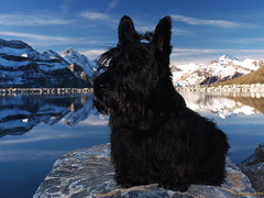 Rasmus on Kleine Scheidegg (Lars Odemark) Tags: lake alps reflection hiking swiss scottish terrier rasmus swizerland kleine scheidegg ineffable