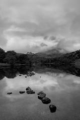 Stepping Stones (in wish of some sky!) (Benjamin Edwards) Tags: uk sky blackandwhite wales nationalpark nikon stones snowdonia landcape d300 silverefexpro