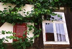 (:Linda:) Tags: reflection window germany town curtain vine thuringia written climber information fachwerk timberframing weinrebe gardine heldburg unterland reflectiononwindowpane