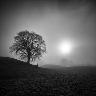 Tree, Mist and a bit of Sunlight