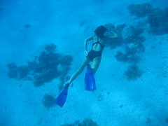 136_3674 (LarsVerket) Tags: egypt snorkling fisk undervannsfoto