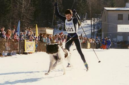 Běh na lyžích se psy