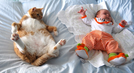 cat and baby on backs