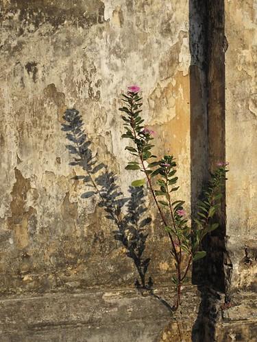 abandoned flower