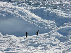 (pijus) Tags: sea vacation white cold ice contrast penguins mar loneliness colours south colores land iceberg fro continent vacaciones hielo icebergs southpole antarctic tierra continente polosur antrtida whitecontinent