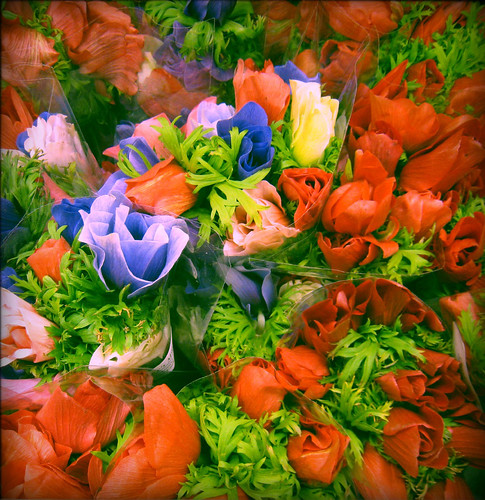 spring flowers at the grocery store