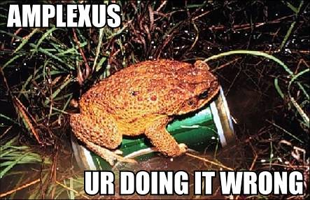 Amplexus - You're Doing It Wrong