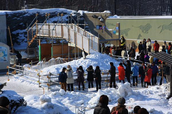 2009北海道-D5-3-旭山動物園_03.jpg
