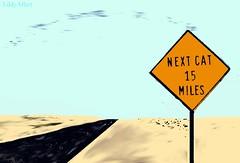 Desert Road Without Cat (Eddy Allart) Tags: road desert roadsign desierto weg woestijn