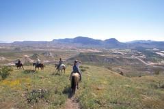 Horses by Lajitas