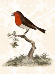 BrownBirdy2 copy (stolismells) Tags: animals naturalhistory fall2003 warmtones 19thcenturyandprior p4727b0320125tif