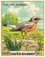 gilbert oiseau 11
