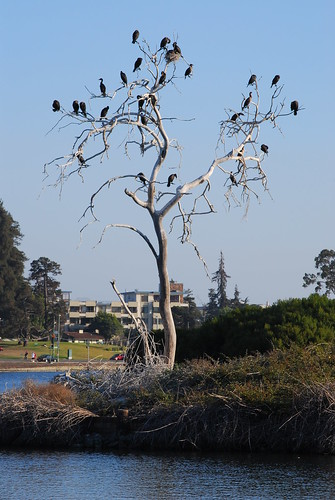 The Cormorant Tree