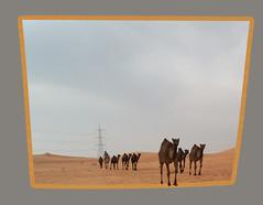 (Abdulrahman AlShetwi) Tags: tower sand desert camel wilderness garnish