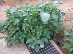 vlita bush