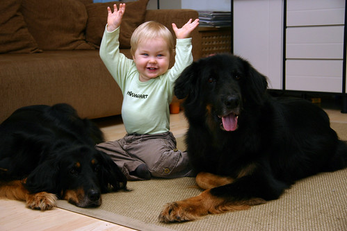Two dogs with small child.