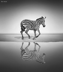 Sea of Freedom (Ben Heine) Tags: ocean life africa wild wallpaper blackandwhite bw mer reflection art smart lines speed print vent freedom design coast seaside sand eau poem dof wind noiretblanc kenya pov geometry quality surrealism fineart shapes sable fast run cte poetic nikond70s symmetry class clean libert zebra instant abstraction dust capture copyrights tones lopen perfection hunt pattes vite nationalgeographic chasse afrique bigfive vitesse waterscape highres sauvage propre museau zbre courir poussire wiatr classicshot petersquinn benheine flickrunitedaward romanticsurrealism seaoffreedom infotheartisterycom