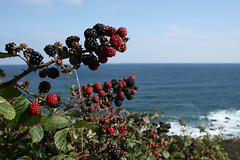 Autumn Fruits (Andy at 8) Tags: autumn sea fruit blackberries britishseascapes