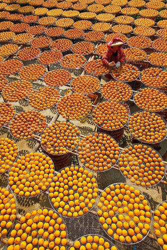 Persimmon (Kaki or Shizi) Fruit Sun Drying 晒柿餅 by olvwu | 莫方.