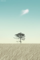Lonely, really Lonely (Ben Heine) Tags: autumn wallpaper sky tree green art fall ecology weather silhouette clouds forest painting season print poster vent countryside energy solitude poem alone loneliness dof belgium wind pov wheat dream dry boom clean monsoon simplicity environment lonely neat minimalism metaphor t copyrights spa arbre fagnes symbolism ecosystem seul tronc paille saison mousson bl rve cologie savane softcolours wiatr petersquinn scheresse benheine thesuperbmasterpiece infotheartisterycom lonelyreallylonely