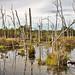 Missisquoi National Wildlife Refuge (Stephen J. Young Marsh)