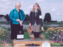 Best of Breed Harley, shown by owner/handler Lydia.  Very sadly Harley's last show :^( We sure miss him.