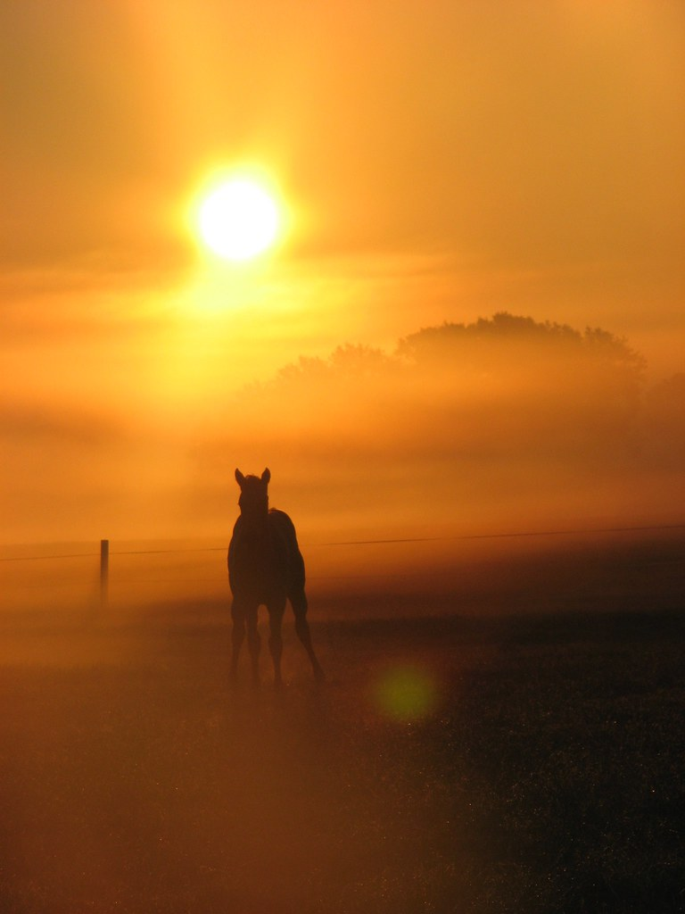 morning foal
