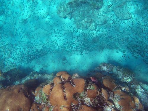 thousands of fish below!